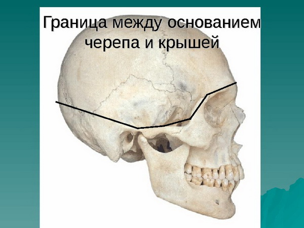 Граница черепа